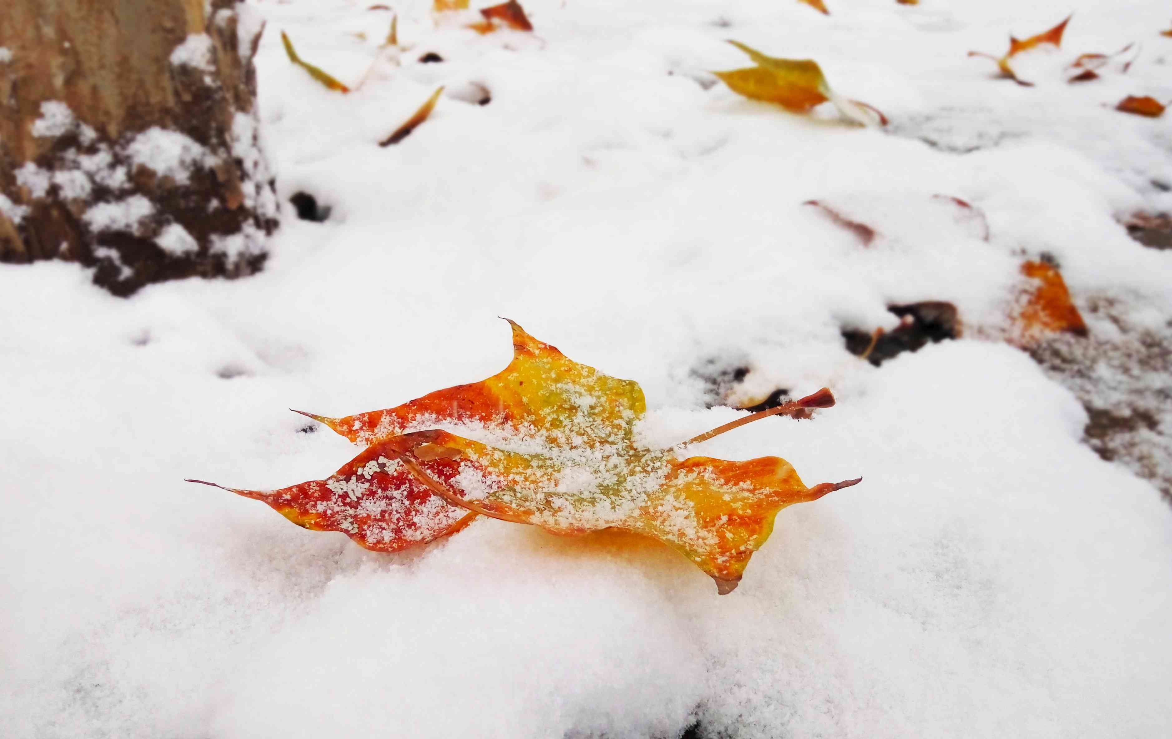 a-leaf-in-the-snow.jpg